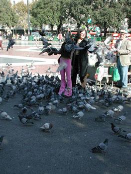 Killer pigeons!